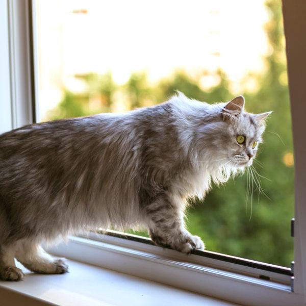 cat window mesh